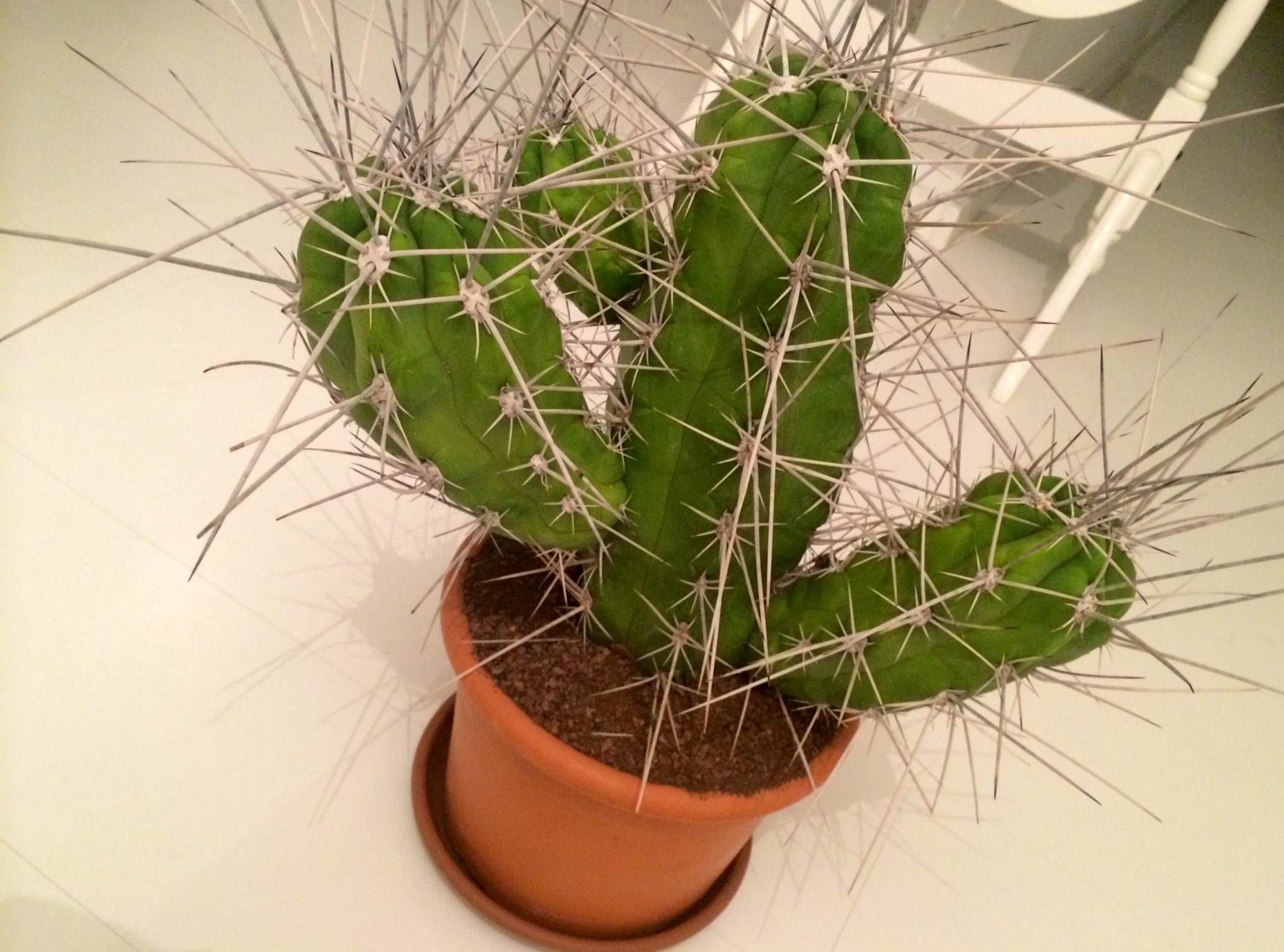 cactus kopen amsterdam