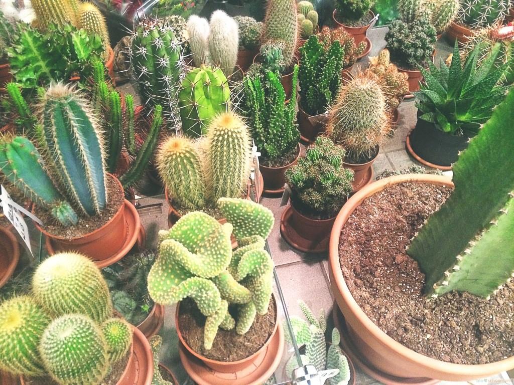 Cactus shoppen in Amsterdam