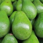 De rijpe avocado